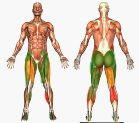 Physio Assessment Visualisation